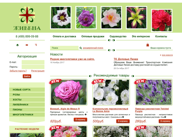 Живена Интернет Магазин Цветов Каталог Весна Розы